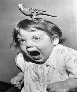 "This is what happens when you Google image search ""scary bird."" Yes."